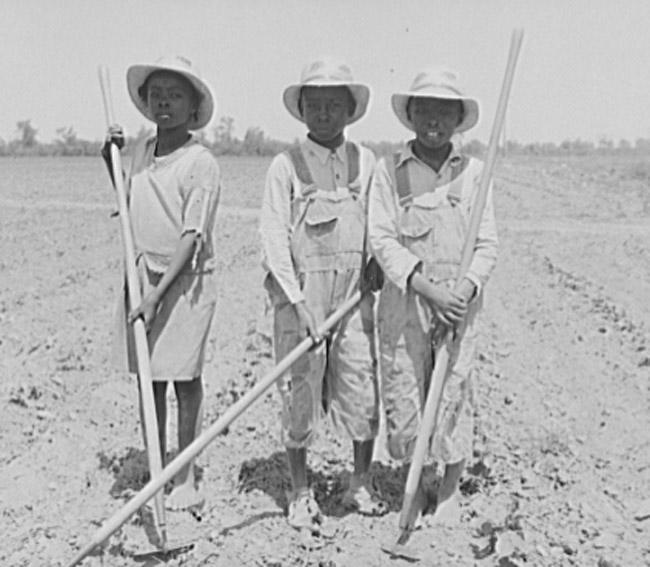 Children chopping cotton.