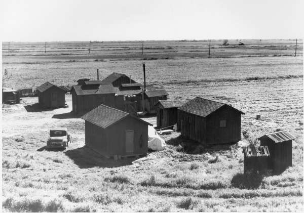 Ryer Island, Sacramento County, California. Company Camp For Crew of Filipino Asparagus Field Worker