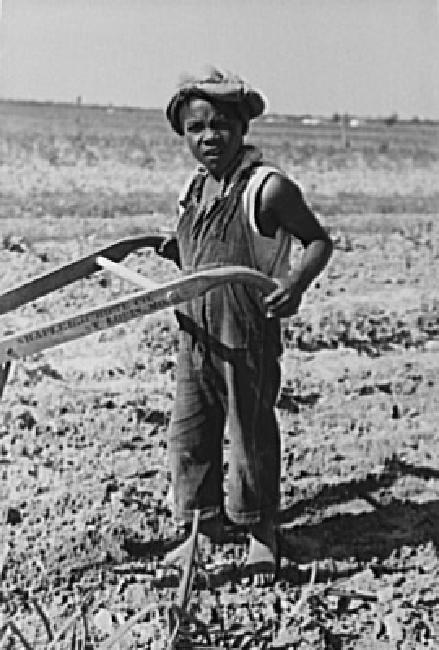 Child of sharecropper cultivating cotton