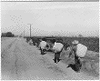 Cotton Pickers at Noontime