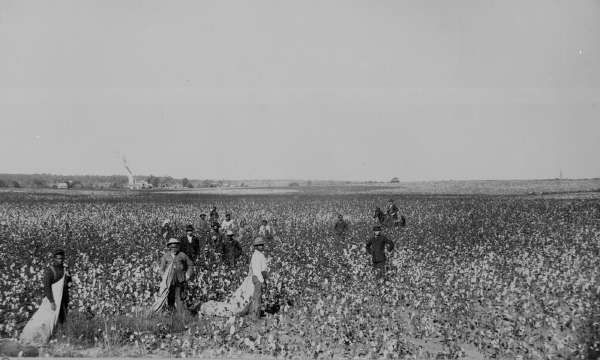 Cottonpicking in Oklahoma
