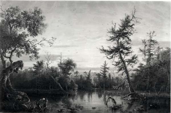 View, Dismal Swamp, North Carolina