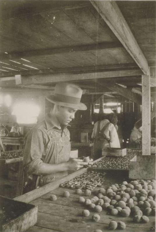 Filipino Man Processing Fruit