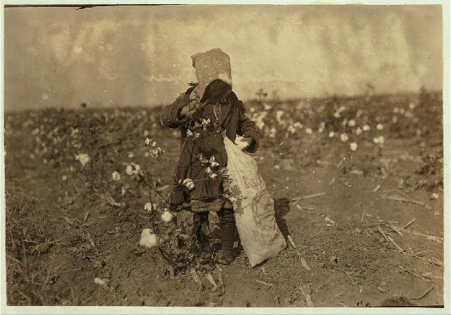 Dovey Kirkpatrick Picking Cotton