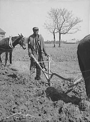 Sharecropper Plowing Montgomery County, Alabama