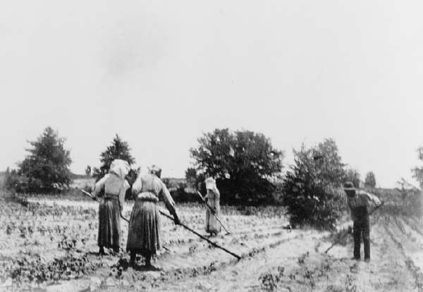 Three Women And One Man Hoeing In Field
